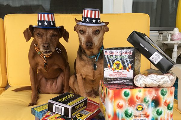Two dogs wearing patriotic hats, surrounded by fireworks.
