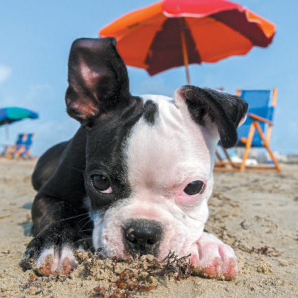 Puppy in the sand at the beach.
