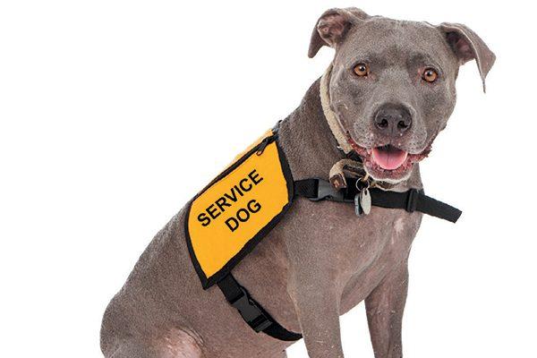 A service dog. Photography by adogslifephoto/thinkstock.
