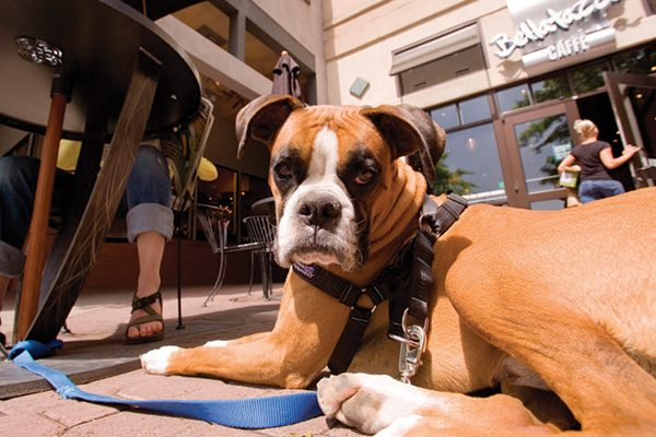 A dog sitting outside.