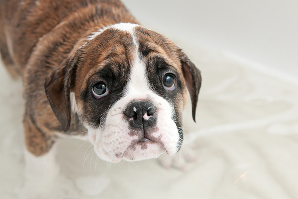 Is Your Dog Scared of Thunder? 6 Tips for Soothing Him