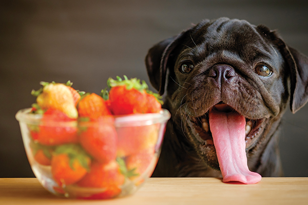 Can Dogs Eat Strawberries Apples And Grapes