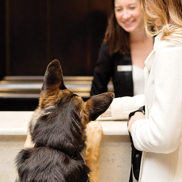 A dog checks into the XV Beacon Hotel in Boston.