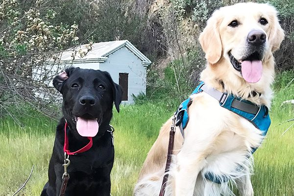 Beau and his brother Cooper take a break during a walk.