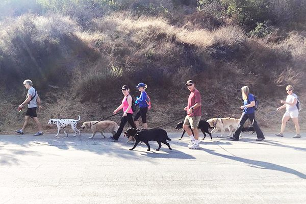 Dogs and their folks on a walk.