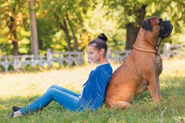 A Bullmastiff sizes up against a young girl.
