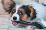 A dog with a grooming tool or brush.