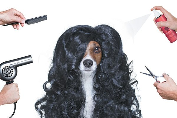 A dog with a wig on, surrounded by grooming products.
