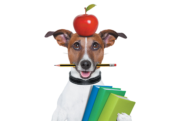 Can Dogs Eat Apples With Skin