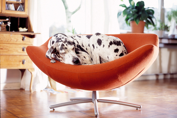 A Great Dane curled up asleep on a red chair.