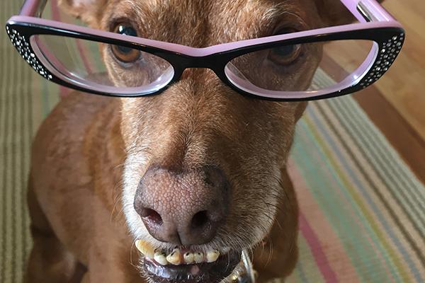 Tampa Bay wearing glasses.