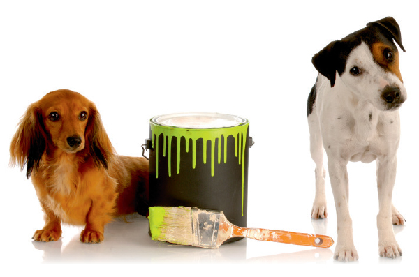 How to Find Pet-Safe Paints That Aren't Toxic to Your Dog