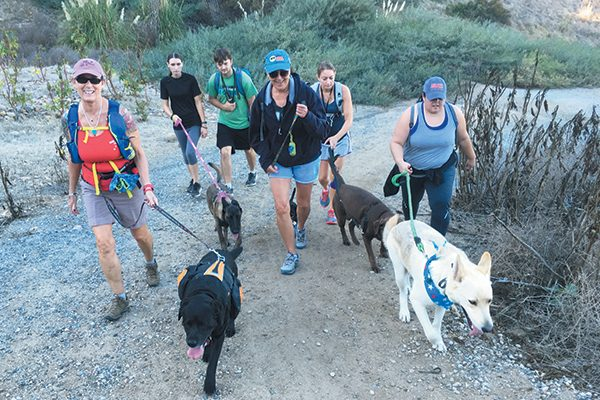 People hiking with their dogs.