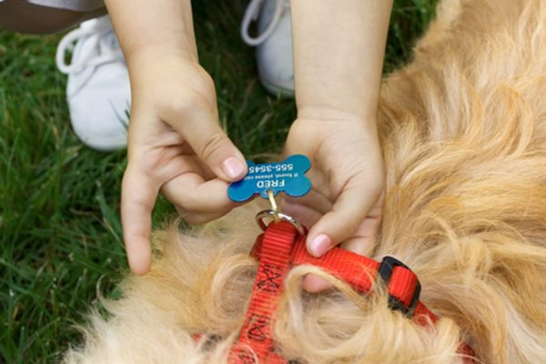 Make sure your dog is appropriately ID tagged and microchipped.