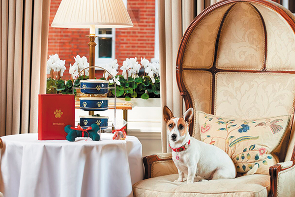 Doggy Tea at Egerton House Hotel in London.