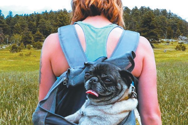 Outward Hound dog backpack.