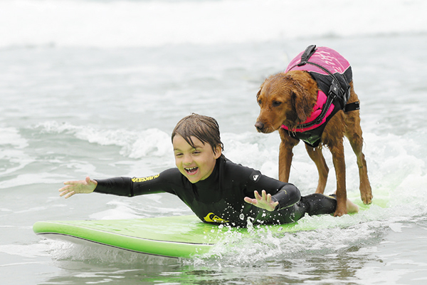 Ricochet the surf dog.