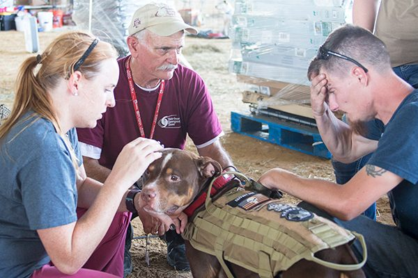 A dog receiving treatment after Hurricane Harvey in Texas.
