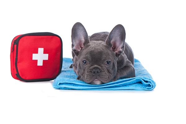 A dog next to a First Aid kit.