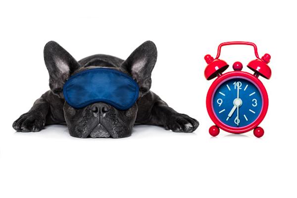 A dog sleeping with an eye mask on and an alarm clock.