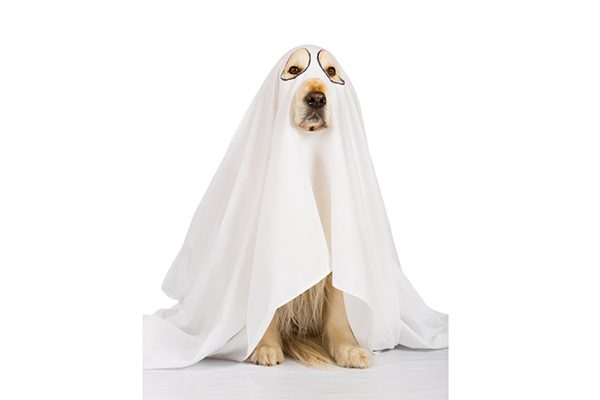 A dog in a ghost costume.
