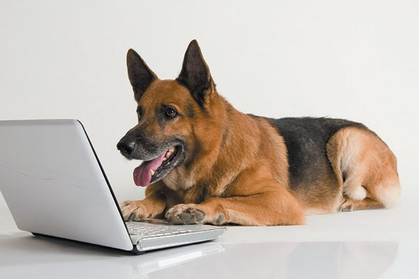 Insurance For Dogs >> Pet Insurance For Dogs Should You Have It