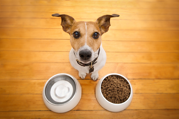 What Is The Best Dog Food For My Puppy