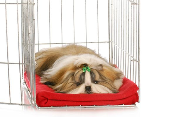 A longhaired dog in a crate.