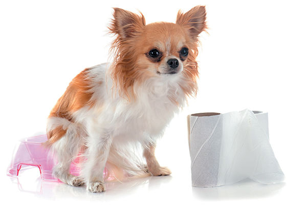 Dog Diarrhea — At-Home Treatment and When to See a Vet