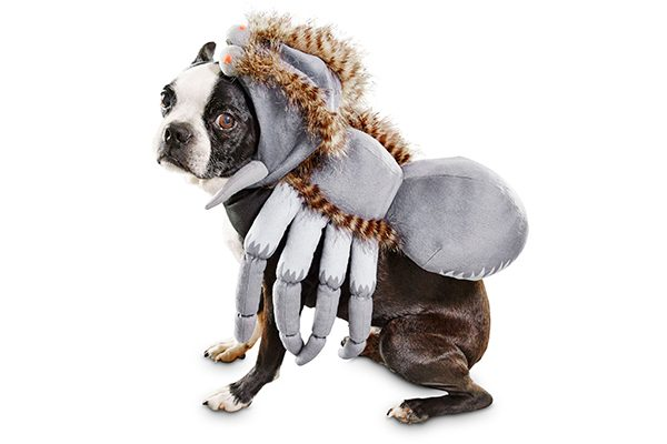 Dog Spider Costume.