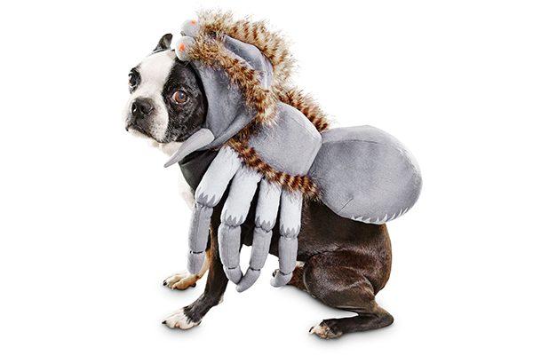 Dog Spider Costume.