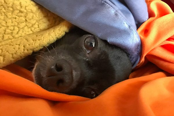 Don't let your dogs hog all the blankets!