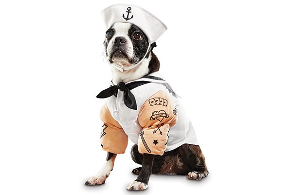 Dog Sailor Costume.