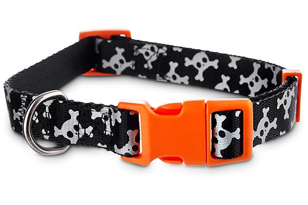 A dog skull collar. Photography courtesy Petco.