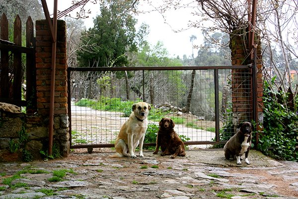 International dogsitting.