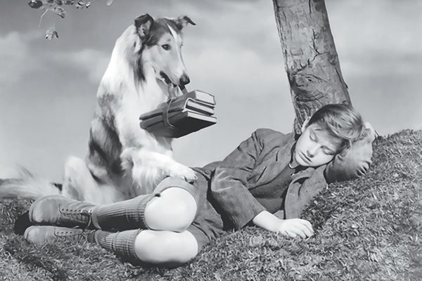 Eric Knight's Lassie Come Home novel and the succeeding movies and television shows gave the breed even more popularity.