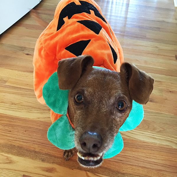 Pumpkin costume. Photography courtesy Melissa Kauffman.