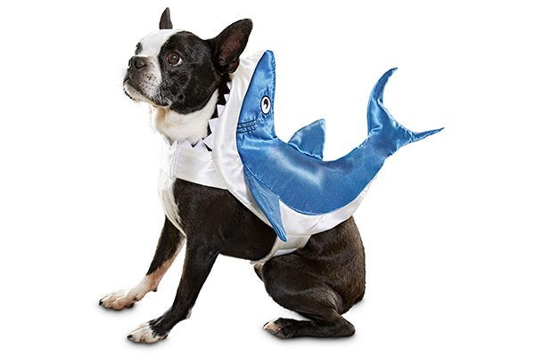 Dog Shark Costume.