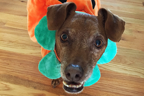 & Dug Up at Dogster: 8 Spooktacular Halloween Costume Ideas for Your Dog
