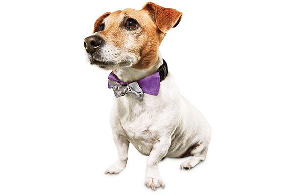 Dog skull bow tie.