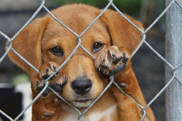 Give A Dog A Second Chance