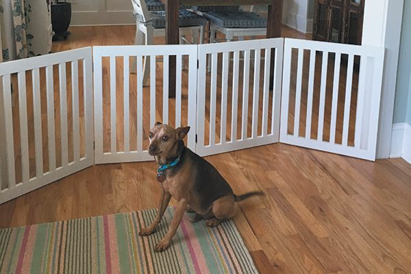 Use a baby gate to keep your dog contained, preferably one that lets your dog see your visitors.