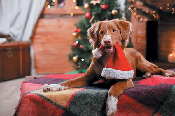 A dog holiday a Santa Claus hat.