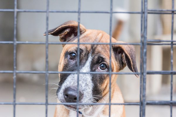 A scared, sad dog behind bars, maybe in a cage.