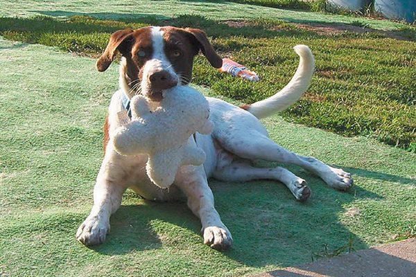 Adam, BDRA's very first rescue dog!