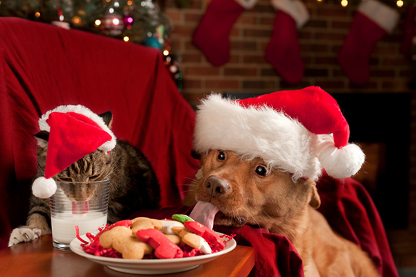 Cat and dog drinking milk and eating cookies.