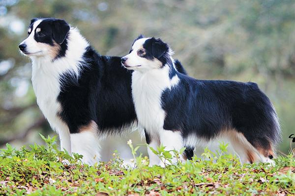American Kennel Club Dog Treats