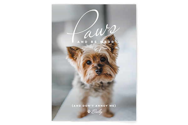 Minted's holiday cards are perfect for dog lovers.