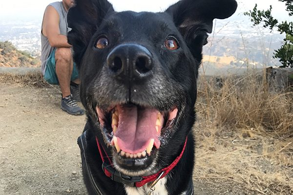 Riggns has gotten a bit slower at hiking as a senior dog.