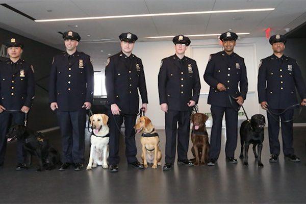 Vapor Wake dogs go through extensive training.